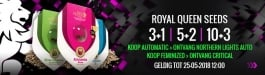 Aanbieding Royal Queen Seeds